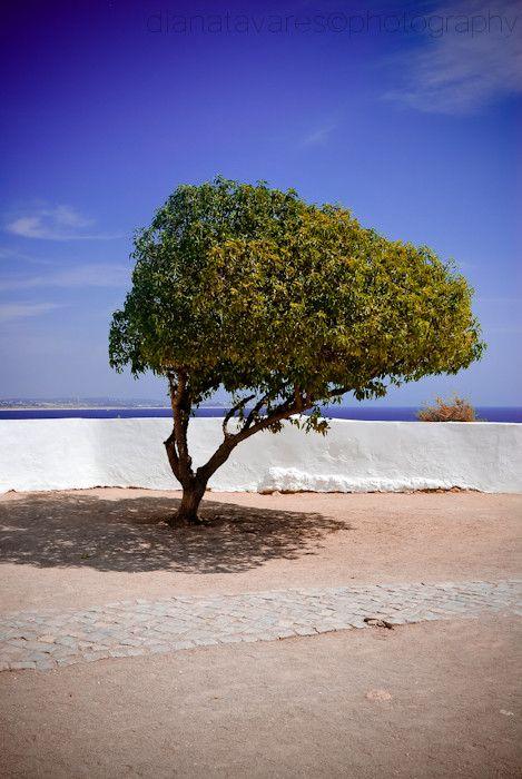 Árvore solitária by Diana Tavares on 500px