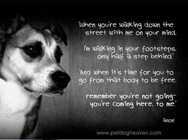 Aww. Made me cry. So cute and sad. I love my dog and miss him very much.