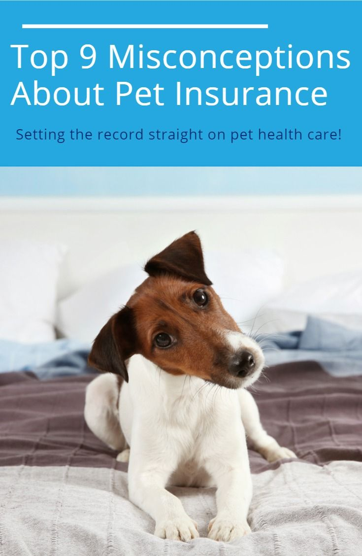 Get The Truth About Some Common Pet Insurance Myths Pet