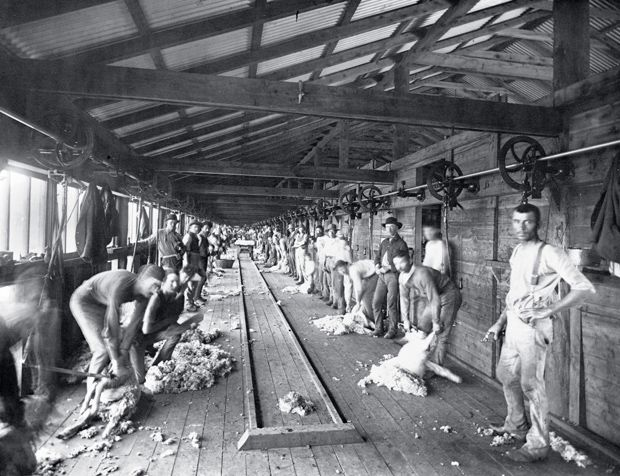 Shearing board, Burrawang station. Burrawang began in 1836 as a squatters' run and by 1866 it covered more than 2000sq.km between Forbes and Condobolin in central-western New South Wales.  The station became legendary for its record wool clip (5000 bales in 1884) and its enormous shearing shed, which employed more than 250 men. The station was the scene of a labour dispute during the depression of 1893.