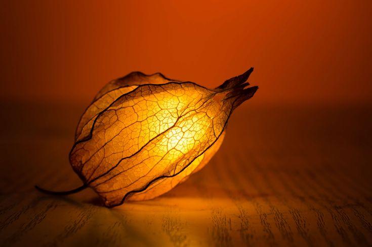#abstract #art #backlit #blur #bud #color #design #flower #gold #illuminated #leaf #light #texture