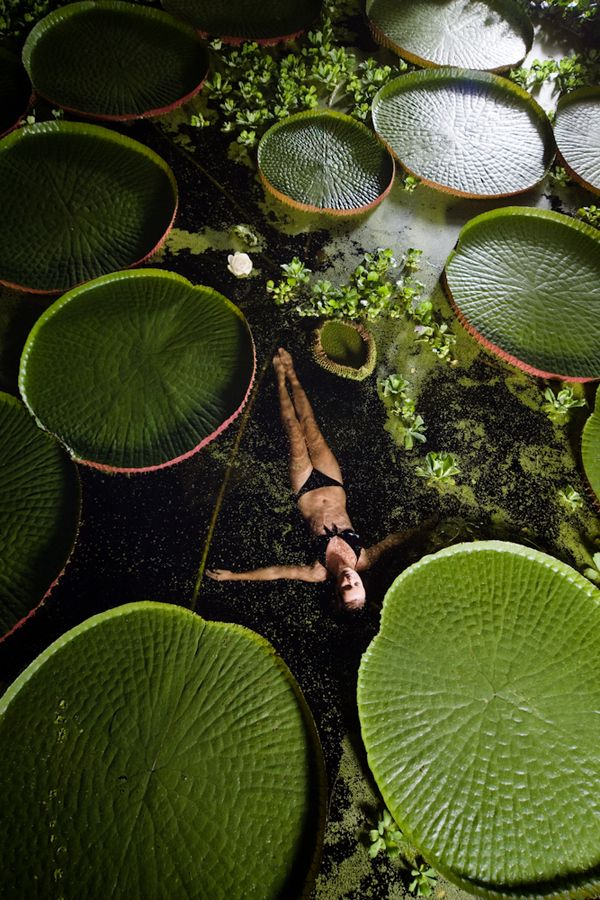 swimming with giant lily pads