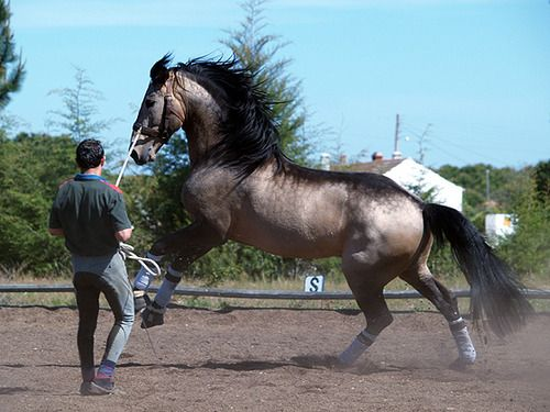 The most beautiful buckskin I have ever seen...silver? Really!