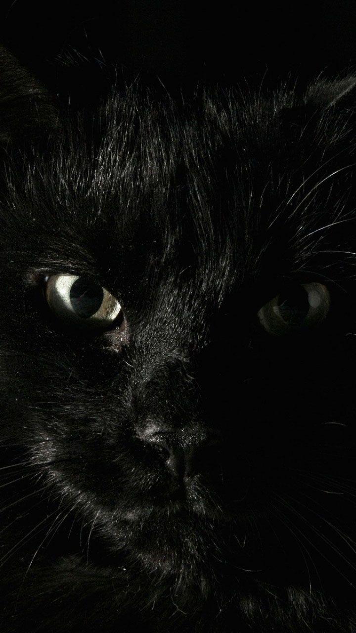 Картинки с черными котами на телефон, днем