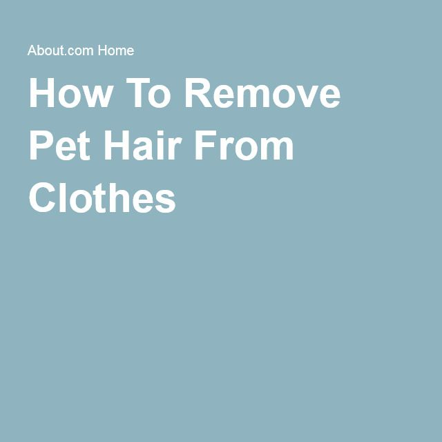 Best 25 Remove Pet Hair Ideas On Pinterest My Daily