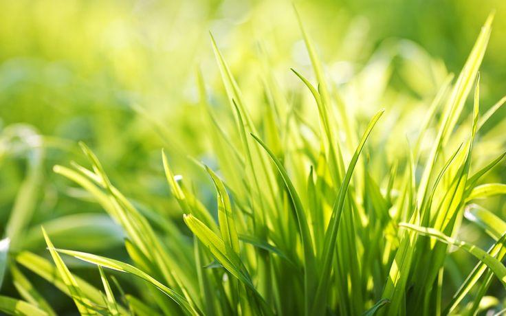 #papel pintado bokeh, #Fondos de verano, #fondos de pantalla planta, #fondos hierba macro, #hierba travichka, #Fondos de pantalla de primavera, #fondo de pantalla panorámica, #bokeh wallpapers, #paz, #Fondos de pantalla ancha, #fresco, #mañana, #primavera, #planta, #alegría, #humor, #verano, #verde, #luz, #hierba, #plantas, #macro