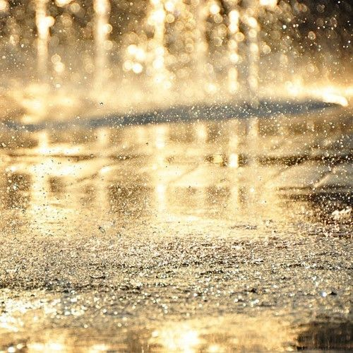 Rain that looks like gold.