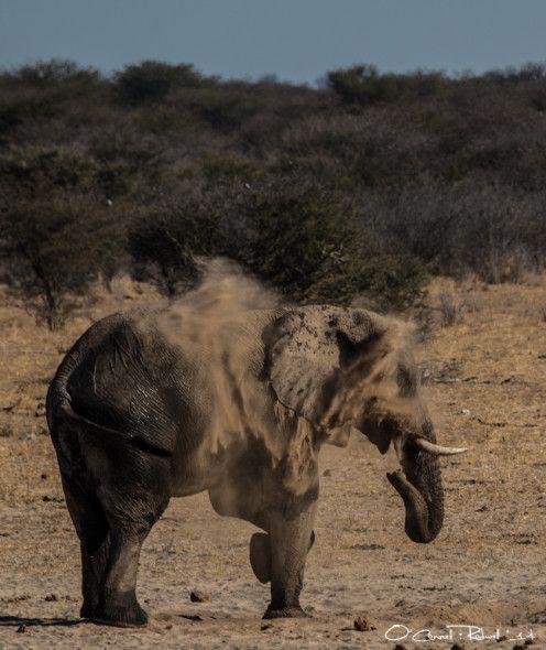 #mushara #elephants http://voices.nationalgeographic.com/keywords/mushara-elephant-project/