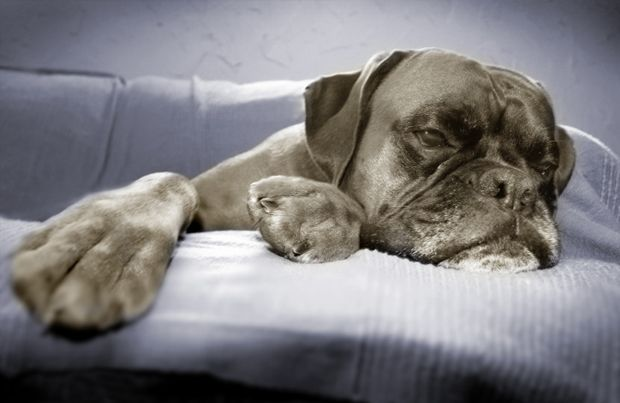Mom....I'm Bored! Tips on How to Happily Occupy a Bored Dog - pet360.com