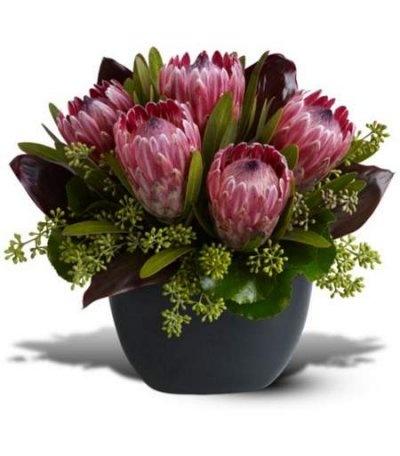 I LOVE proteas!