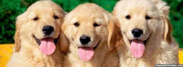3+cachorros