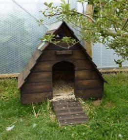 Duck house design idea