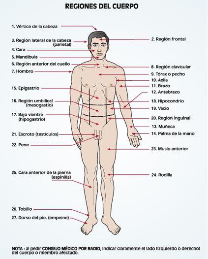 Imagen de las regiones del cuerpo humano en su cara anterior