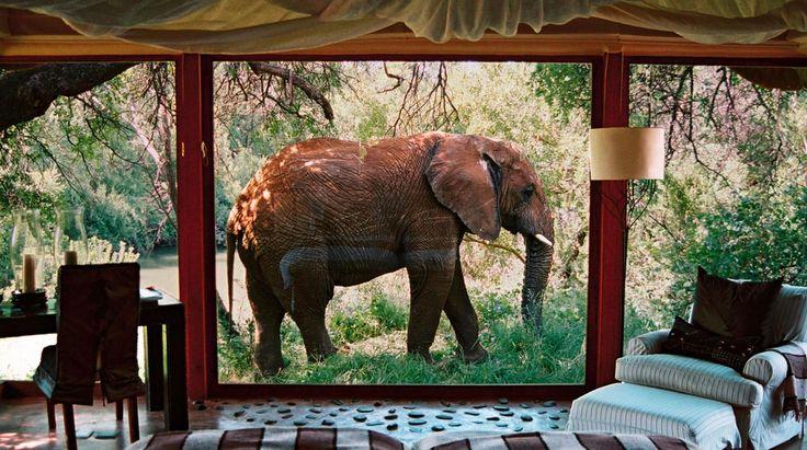 Makanyane Safari Lodge   Bench Africa