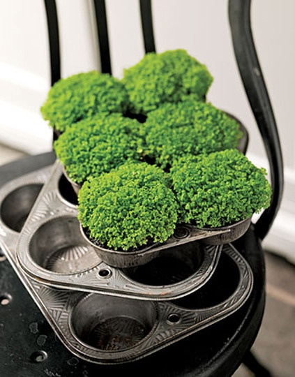 Muffin tins as planters. A nice idea for a kitchen herb garden.