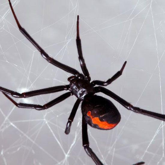 Poison or Pretend?: How to Identify Common Spiders - Wiser Living - Mother Earth Living