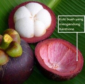 Manggis adalah buah asli tropis Asia Tenggara yang disebut-sebut untuk antioksidan, terutama xanthones. Buahnya, termasuk kulit dan pulp, dapat bubur dan kadang-kadang dijual sebagai minuman. Produk jus manggis juga dapat dicampur dengan jenis lain dari jus. Kulit yang dapat dikeringkan dan dibuat menjadi bubuk, dan zat juga diambil dari kulitnya. Produk manggis juga tersedia dalam kapsul dan bentuk tablet.