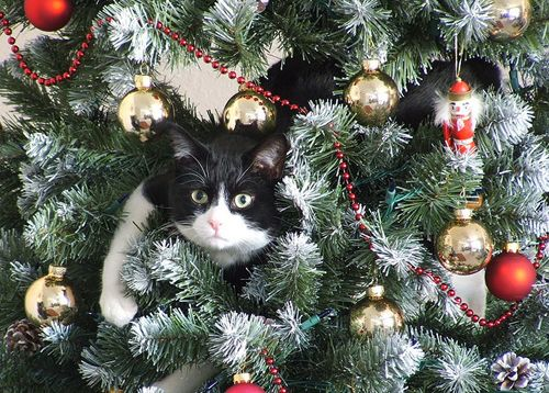 Ornaments are history 109 cats celebrating christmas ornaments gift