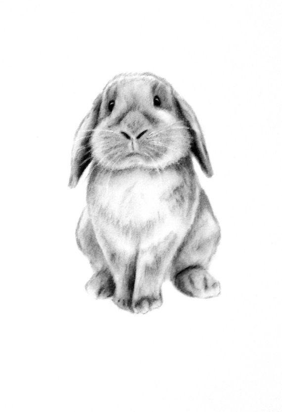 Rabbit Art ORIGINAL Charcoal 5x7 Lop Eared Rabbit by JaclynsStudio
