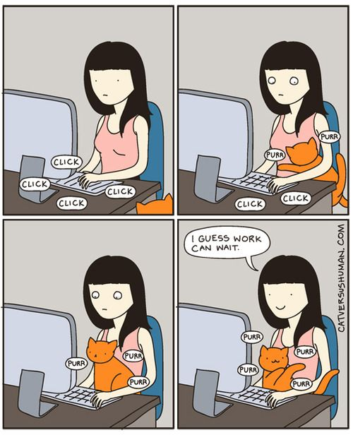 cat versus human, comics, comic strips, animals, cats