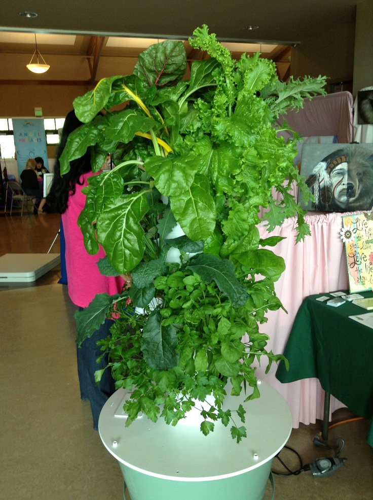"My Show Tower at the Holistic Fair. People were walking by asking about my ""wax salad tree"" because it was so lusciously green, healthy and vibrant they thought it was fake! This tower is 31 days old"