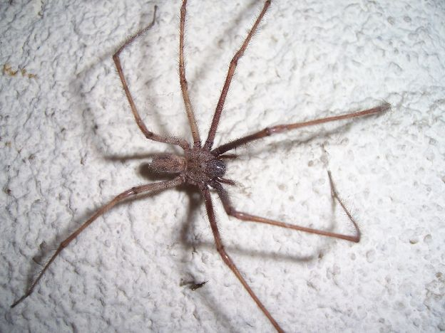 Se débarrasser des araignées sur Radins.com