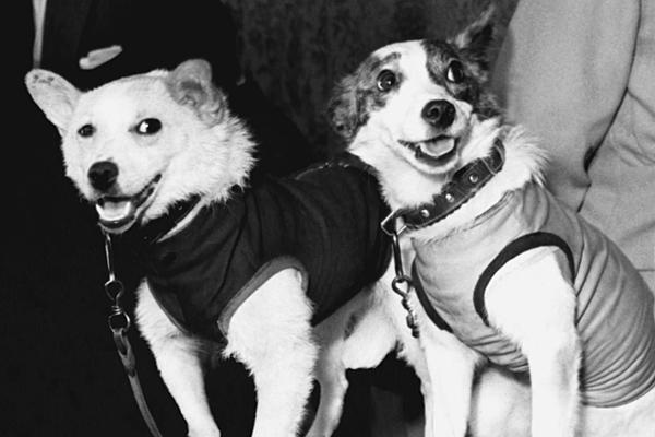 Belka and Strelka    Launched August 19, 1960, along with a rabbit, 42 mice, 2 rats, flies, plants and fungi, they orbited the earth 17 times before successfully returning, a first. Strelka went on to have 6 puppies, one of which was presented to Caroline Kennedy.