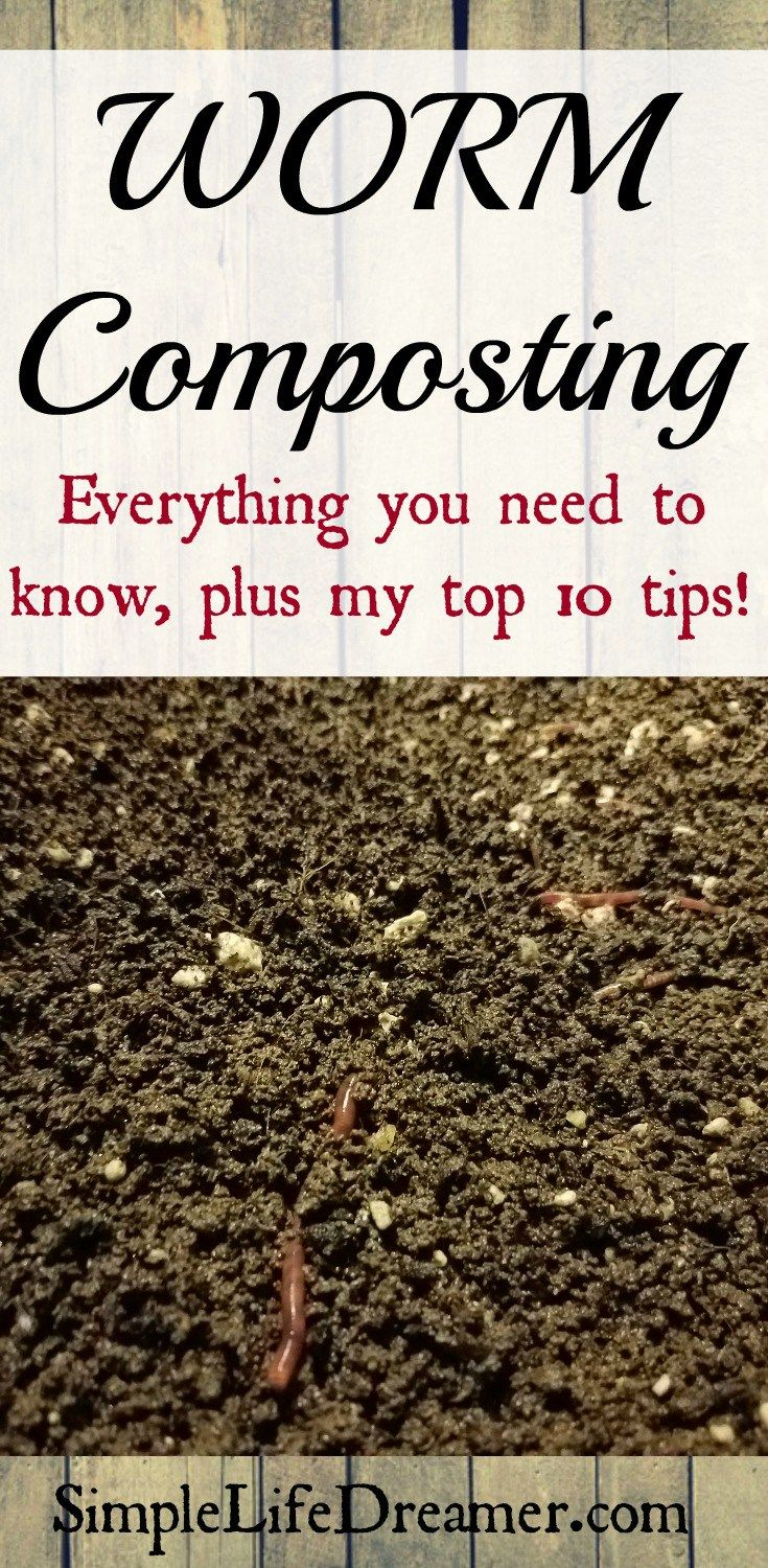 Everything you need to know about worm composting food for Fishing worm farm