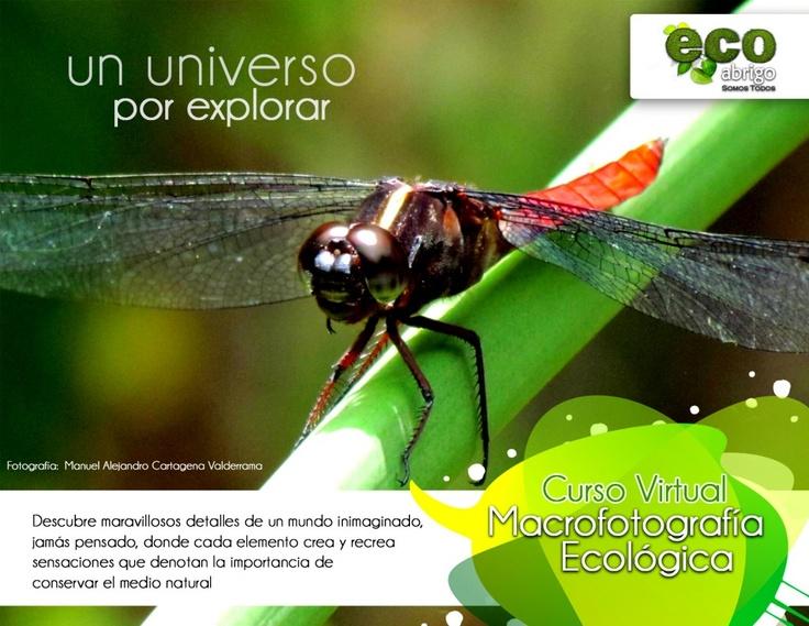 Curso Virtual de Macrofotografía Ecológica.  http://render-web.com/renderweb/inscripciones-macrofotografia-ecologica-curso