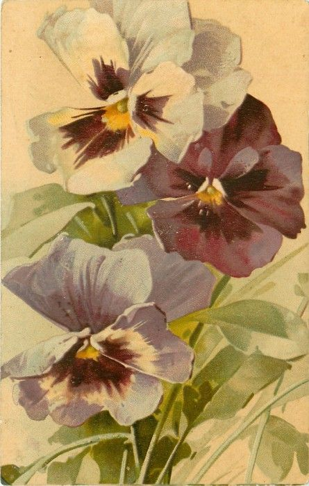 three pansies, one white with purple centre, one purple, one lavender with purple centre, stalks along bottom of card