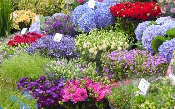 Floating Flower Market - Spring in Holland - Holland.com