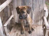 <3 likes gypsy a bit  plott hound