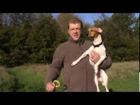 Comment arrêter son chien de sauter sur la visite ou les gens. - YouTube