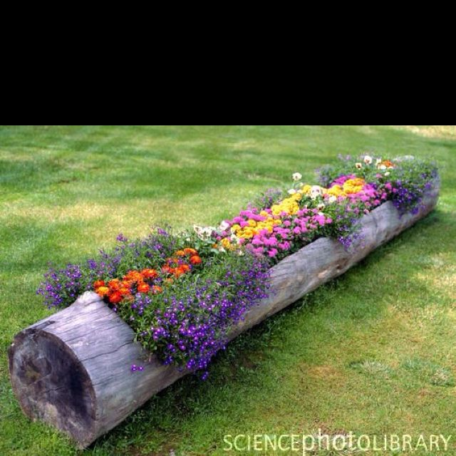 : Gardens Ideas, Trees Trunks, Flower Planters, Tree Trunks, Flower Gardens, Cool Ideas, Flower Beds, Logs Planters, Yards