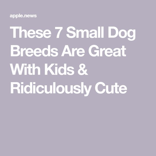 These 7 Small Dog Breeds Are Great With Kids & Ridiculously Cute