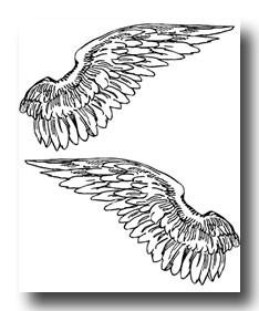 angel wings                                                                                                                                                                                 More