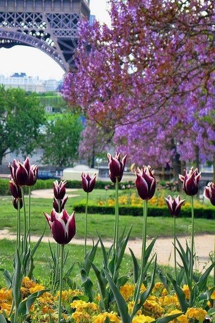 Paris in the Spring | La Beℓℓe ℳystère