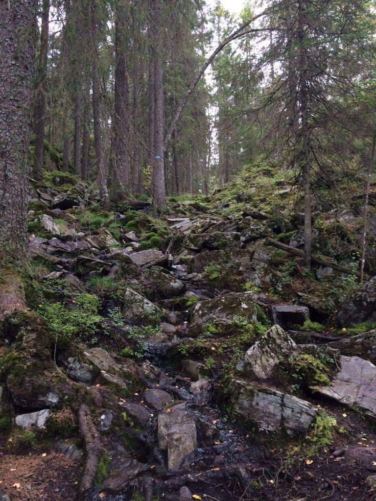 Østmarka i nærheten av Eriksvann