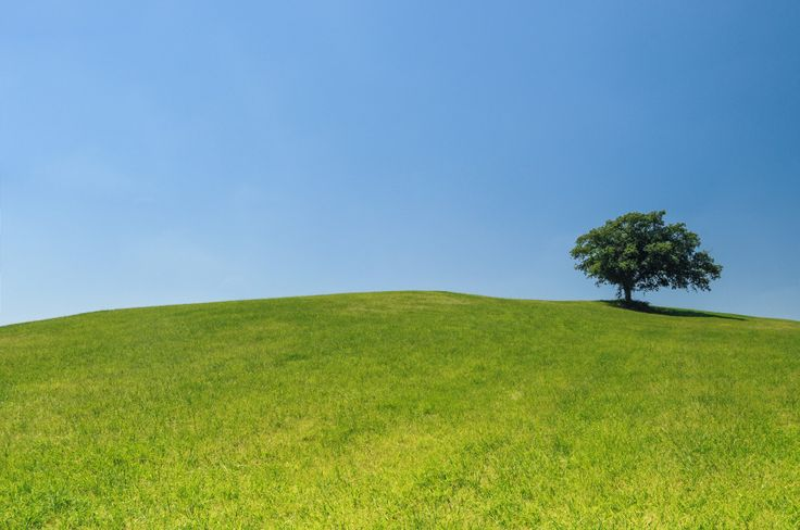 Lonely tree on a hill. Stock photo of a green meadows and a blue sky, on top the hill stands a tree, all alone.