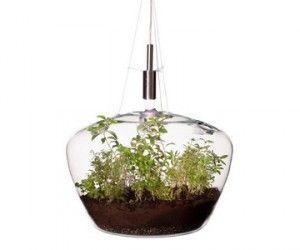 La magia di un piccolo giardino coltivato all'interno di un contenitore di vetro: ecco la guida pratica su come fare un terrarium perfetto. Si tratta di...