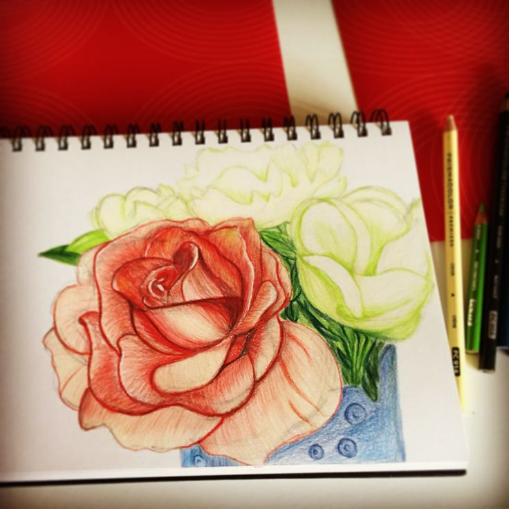 Colored pencil - flowers - by Stingna