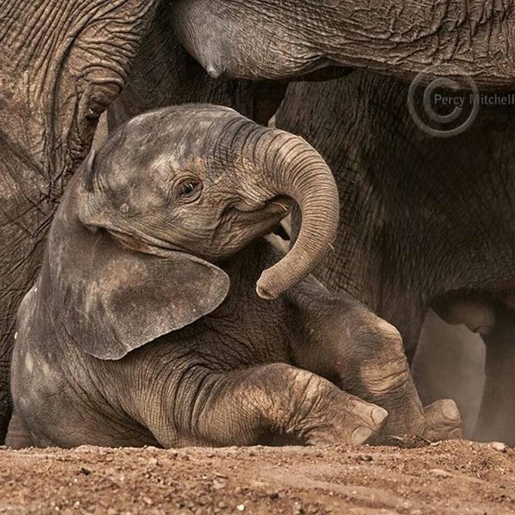 From:  @africansforelephants - For info about promoting your elephant art or crafts send me a direct message @elephant.gifts or emailelephantgifts@outlook.com  . Follow @elephant.gifts for inspiring elephant images and videos every day! . .  #elephant #elephants #elephantlove
