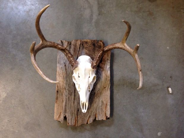 cool barn wood european mount