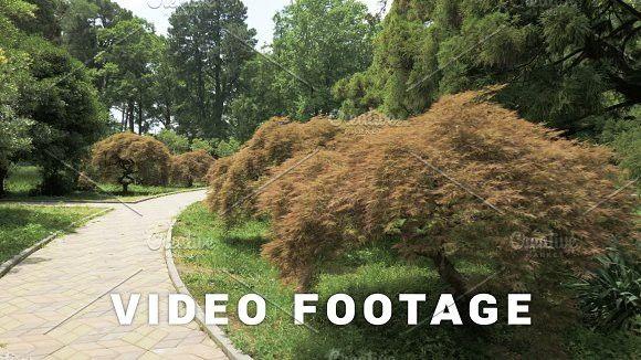 Footpath in one of the biggest botanical park - Batumi, Georgia #botanical