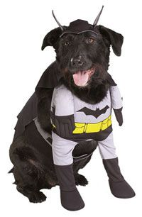 Hilarious Pet Costumes Dress up your doggie (or cat) for Halloween in one of these adorable  costumes  for pets!  sc 1 st  Pinterest & 29 best Déguisement Super Héros images on Pinterest | Superhero ...