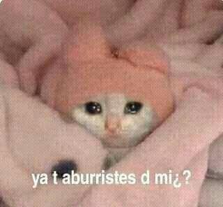 Memes Humor, Cat Memes, Funny Memes, Reaction Pictures, Funny Pictures, Memes Lindos, Sad Cat, Spanish Memes, Cartoon Memes