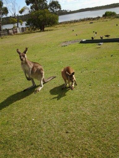 Wildlife sanctuary near Bicheno, Tasmania