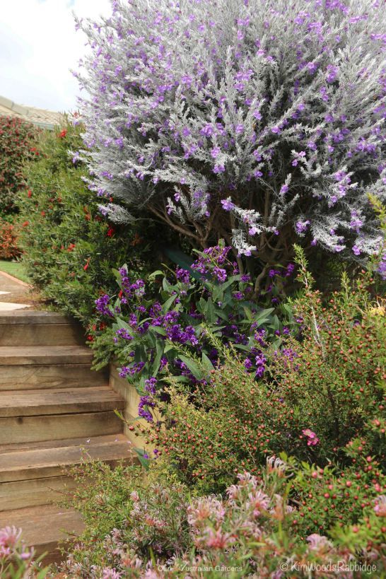 1424 best australian native gardens images on pinterest