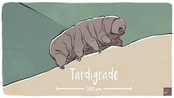 Discover how the Tardigrade has earned its reputation as the toughest animal on Earth. This 1mm creature can survive without water, extreme temperature, radiation and more.