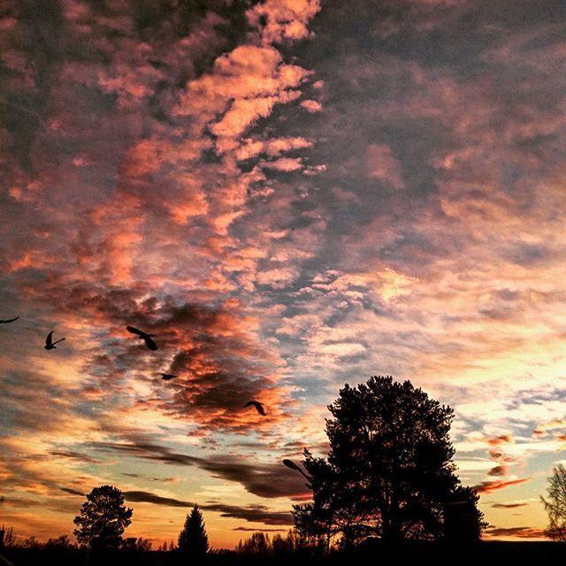 Goodnight😘 #natur #nature #skog #forest #träd #trees #himmel #sky #sol #sun #solnedgång #sunset #moln #clouds #kväll #evening #färger #colors #skugga #shadow #blå #blue #svart #black #orange